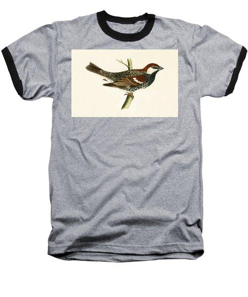 Spanish Sparrow Baseball T-Shirt by English School