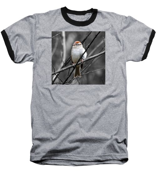 Sparrow Baseball T-Shirt by Paul Wilford