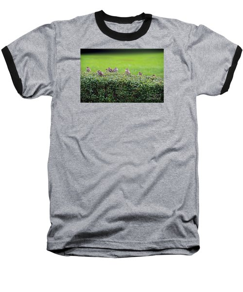 Sparrows Gathering Place  Baseball T-Shirt by Yumi Johnson