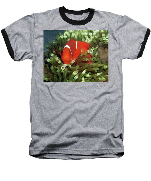 Spinecheek Anemonefish, Indonesia 2 Baseball T-Shirt