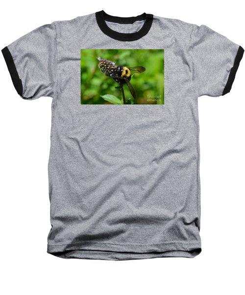 Spot, My Bumblebee Baseball T-Shirt by Lew Davis