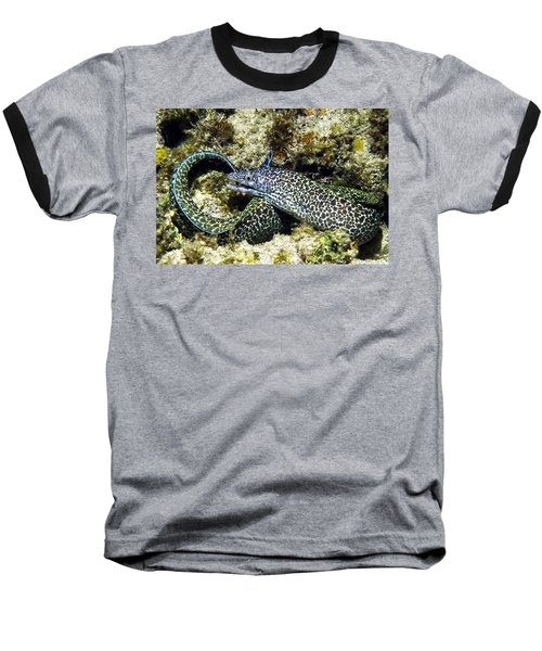 Spotted Moray Eel Baseball T-Shirt