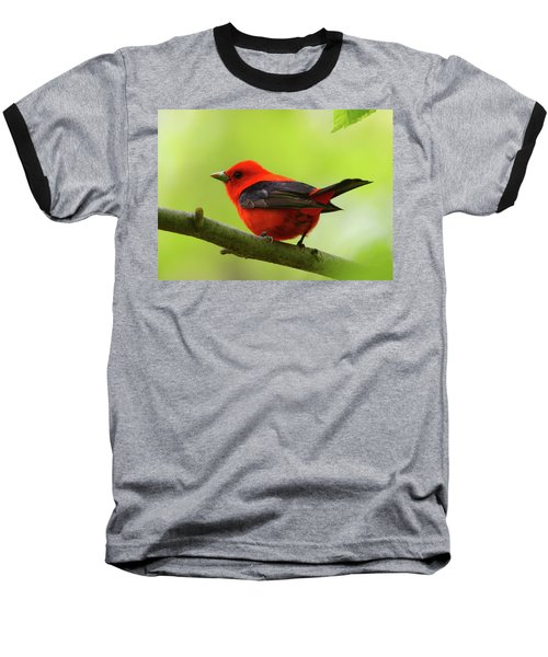 Spring Flame - Scarlet Tanager Baseball T-Shirt