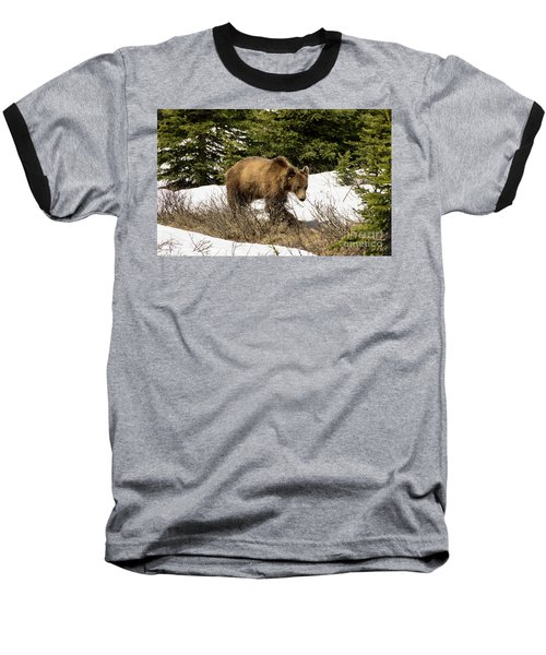 Spring Grizzly Baseball T-Shirt