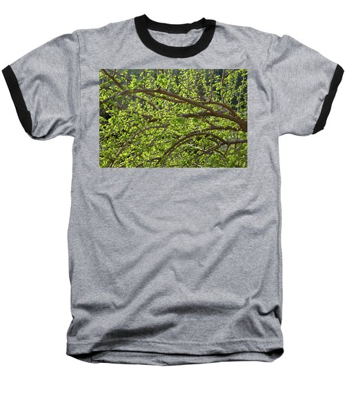 Spring Is Here Baseball T-Shirt by Yoel Koskas