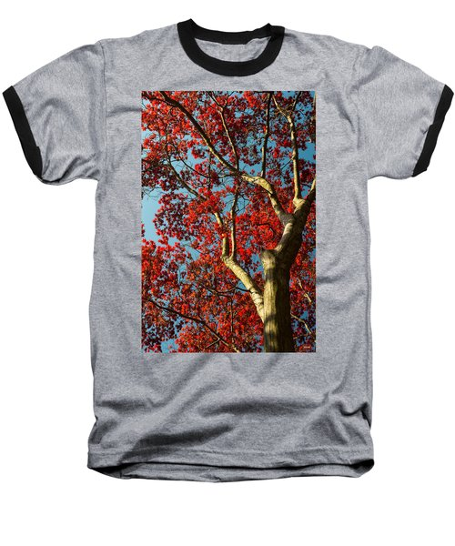 Spring Maple Baseball T-Shirt by Dana Sohr