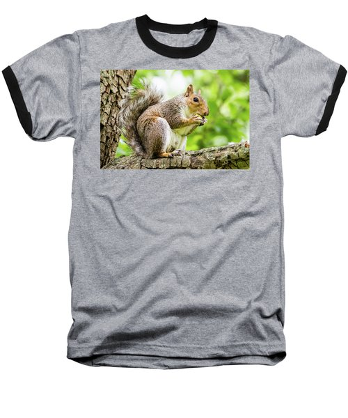 Squirrel Eating On A Branch Baseball T-Shirt