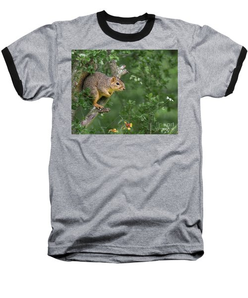 Squirrel In A Tree Baseball T-Shirt