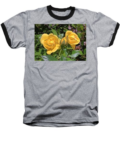 Baseball T-Shirt featuring the photograph St. Andrews Yellow Rose Family by Daniel Hebard