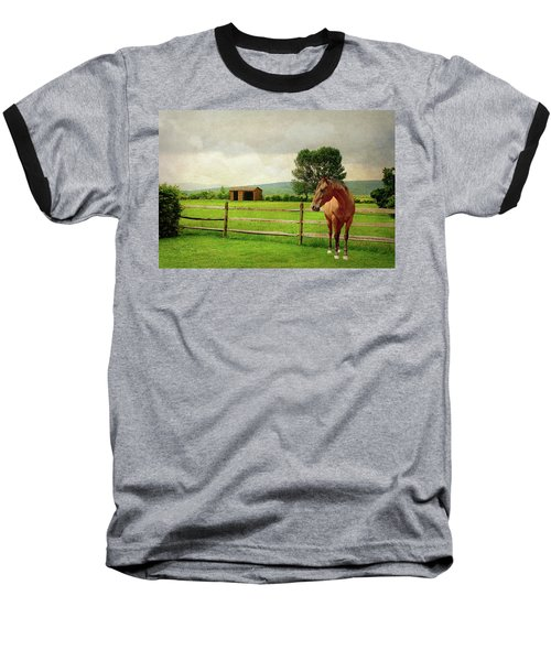 Baseball T-Shirt featuring the photograph Stallion At Fence by Diana Angstadt