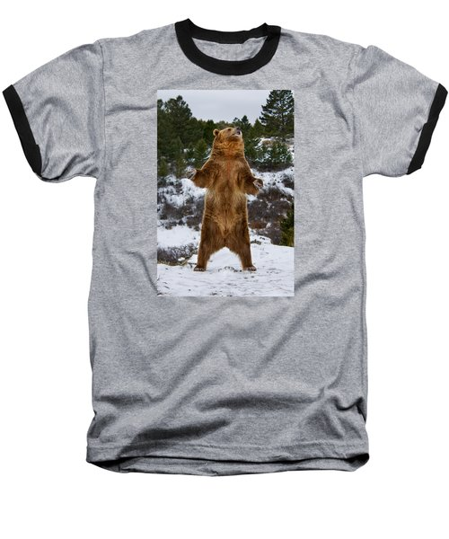 Standing Grizzly Bear Baseball T-Shirt