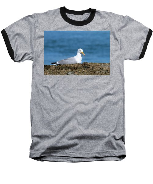 Baseball T-Shirt featuring the photograph Starfish Dinner by Debbie Stahre