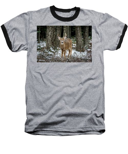 Staring Buck Baseball T-Shirt