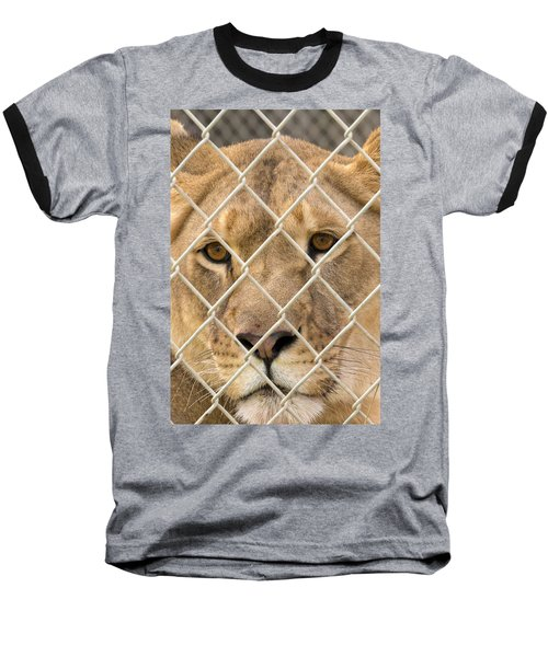 Staring Lioness Baseball T-Shirt