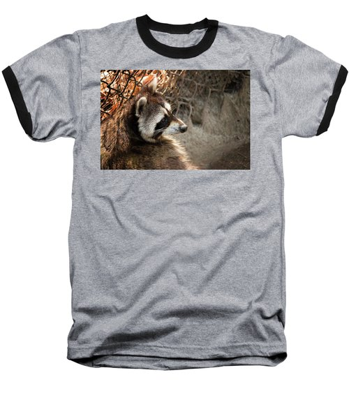 Staring Raccooon Baseball T-Shirt