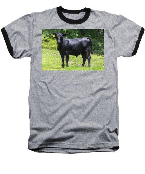 Staring Steer Baseball T-Shirt
