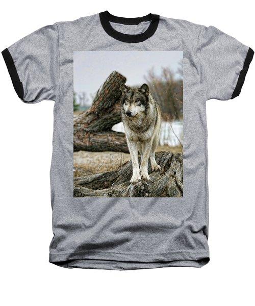 Still Wolf Baseball T-Shirt