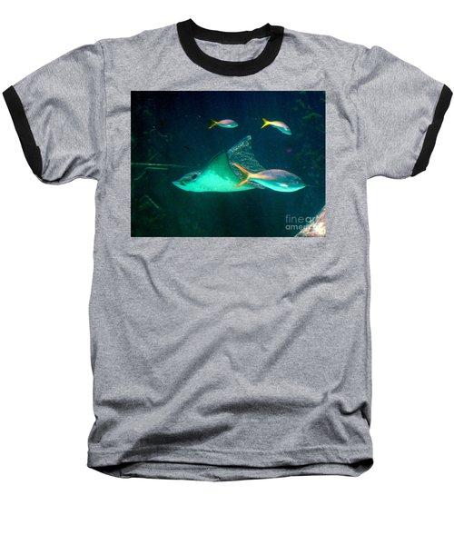 Sting Ray Baseball T-Shirt