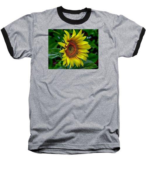 Straight Up Sunflower Baseball T-Shirt by Karen McKenzie McAdoo