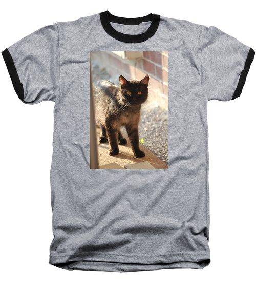 Stray Cat Baseball T-Shirt