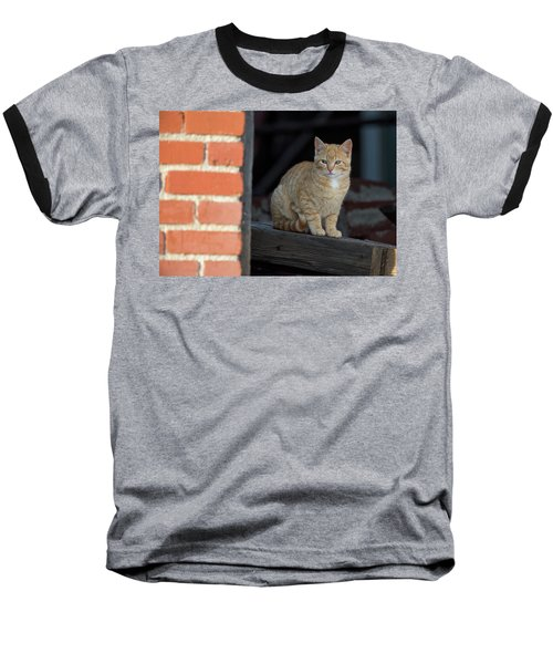 Street Cat Baseball T-Shirt by Scott Warner