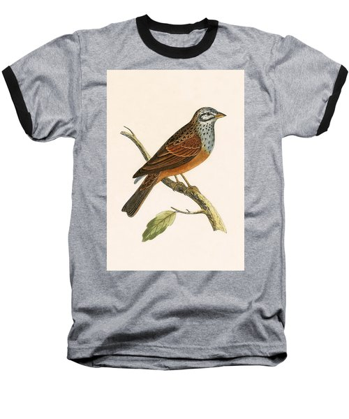 Striolated Bunting Baseball T-Shirt