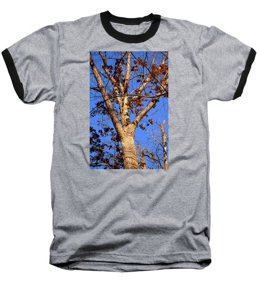 Stunning Tree Baseball T-Shirt