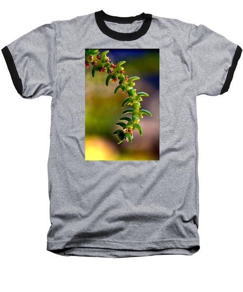 Succulent Hanging Baseball T-Shirt by Josephine Buschman