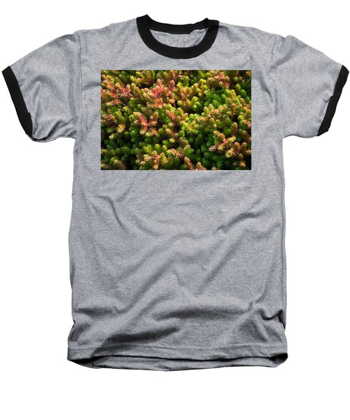 Succulents Baseball T-Shirt by Catherine Lau