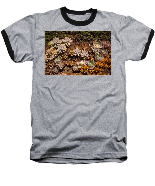 Baseball T-Shirt featuring the photograph Succulents Vertical Garden by Catherine Lau