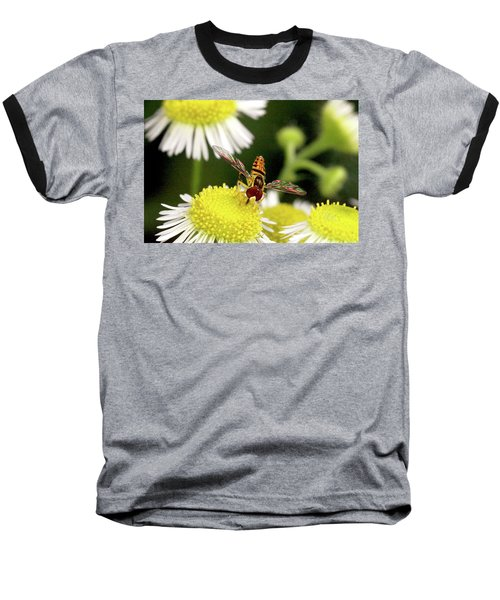 Sugar Bee Wings Baseball T-Shirt