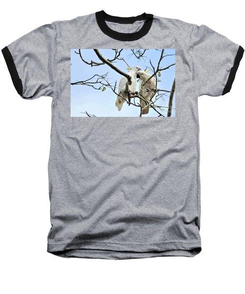 Sulphur Crested Cockatoos Baseball T-Shirt by Kaye Menner
