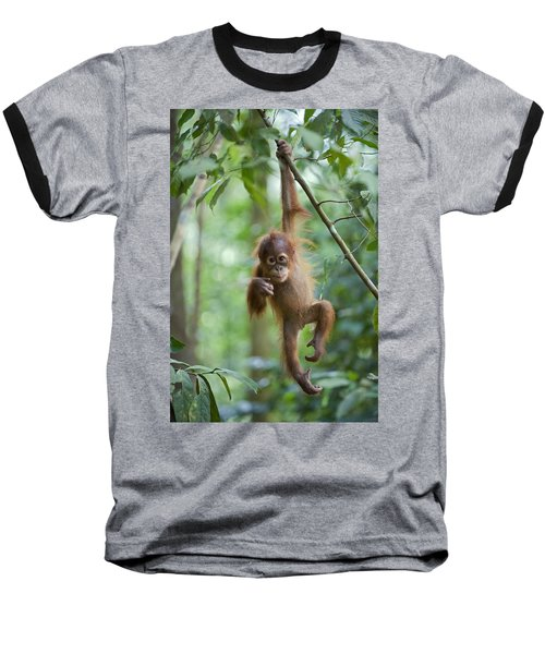 Sumatran Orangutan Pongo Abelii One Baseball T-Shirt
