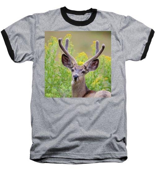 Summer Mule Deer Baseball T-Shirt by Jack Bell