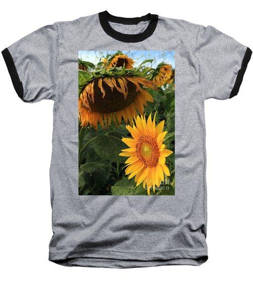 Baseball T-Shirt featuring the photograph Sun Flowers  Past  And  Present  by Paula Guttilla