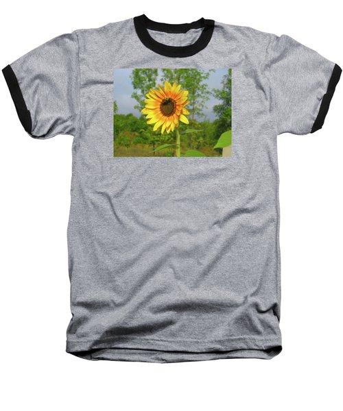 Ah, Sunflower Baseball T-Shirt by Deborah Dendler