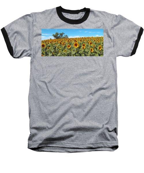 Sunflower Field One Baseball T-Shirt by Barbara McDevitt