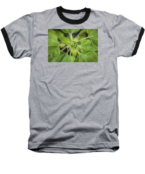Sunflower Helianthus Giganteus Painted Baseball T-Shirt by Rich Franco