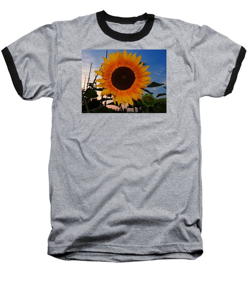 Sunflower In The Evening Baseball T-Shirt by Ernst Dittmar
