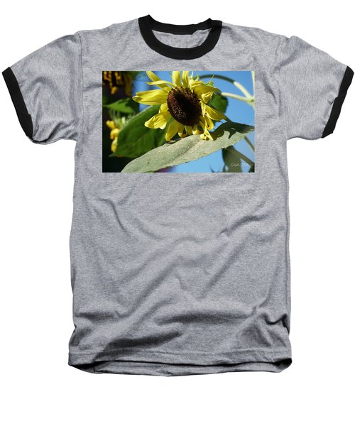 Sunflower, Lemon Queen, With Pollen Baseball T-Shirt