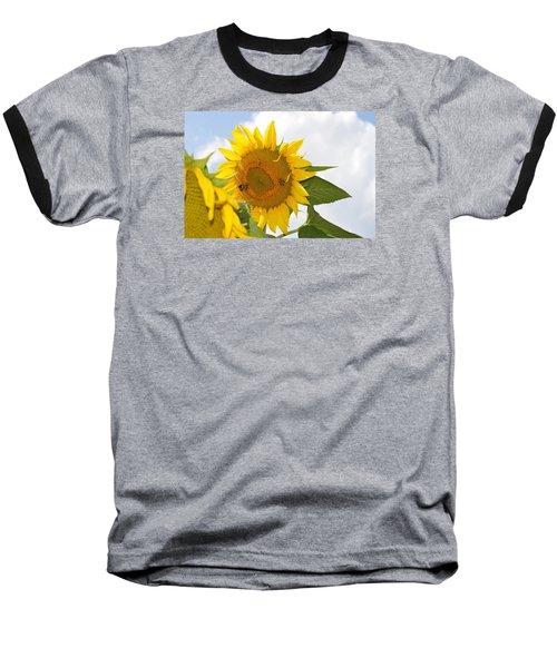 Sunflower Baseball T-Shirt by Linda Geiger