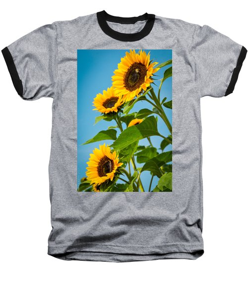 Sunflower Morning Baseball T-Shirt by Debbie Karnes