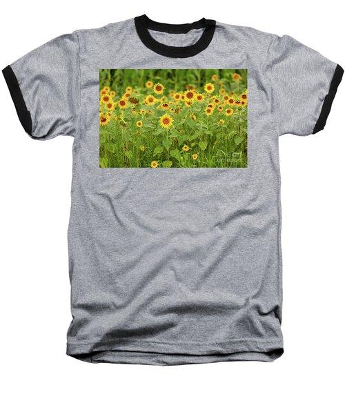 Sunflower Patch Baseball T-Shirt