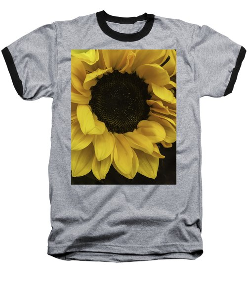 Sunflower Up Close Baseball T-Shirt by Arlene Carmel