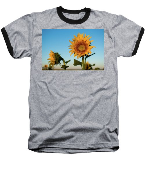 Sunflowers At Sunrise 1 Baseball T-Shirt
