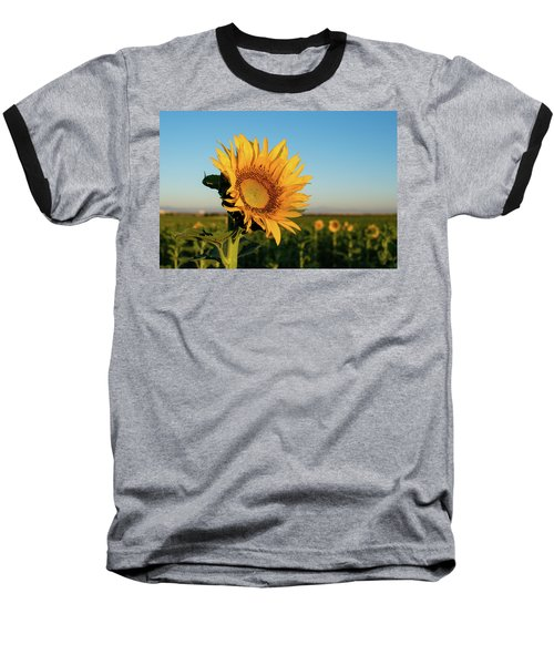 Sunflowers At Sunrise 2 Baseball T-Shirt