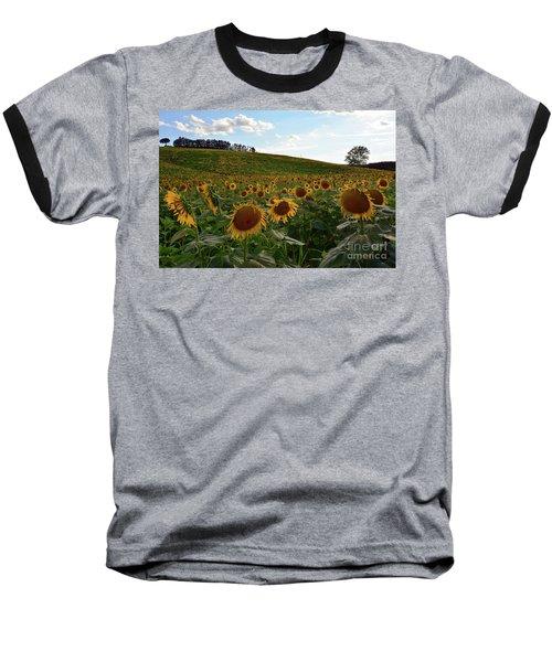 Sunflowers Fields  Baseball T-Shirt