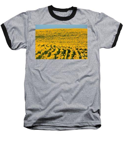 Sunflowers Galore Baseball T-Shirt by Catherine Sherman