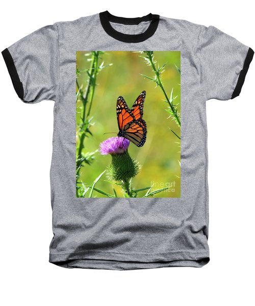 Sunlit Monarch  Baseball T-Shirt