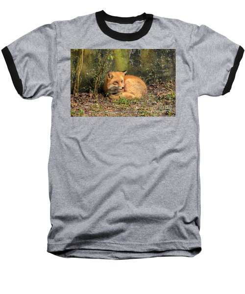 Sunning Fox Baseball T-Shirt